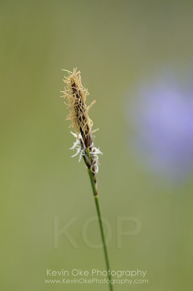 Blade of grass, Gulf Islands, British Columbia