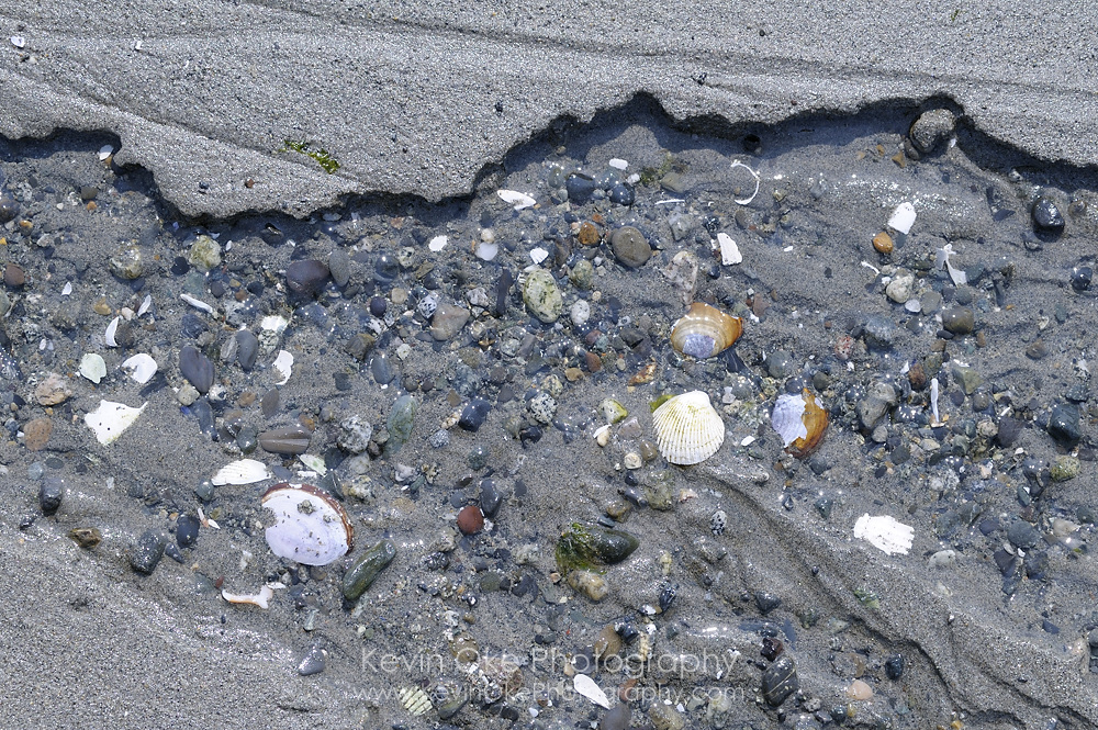Rocks and shells in the sand, Sidney Spit, Gulf Islands National Park Reserve of Canada