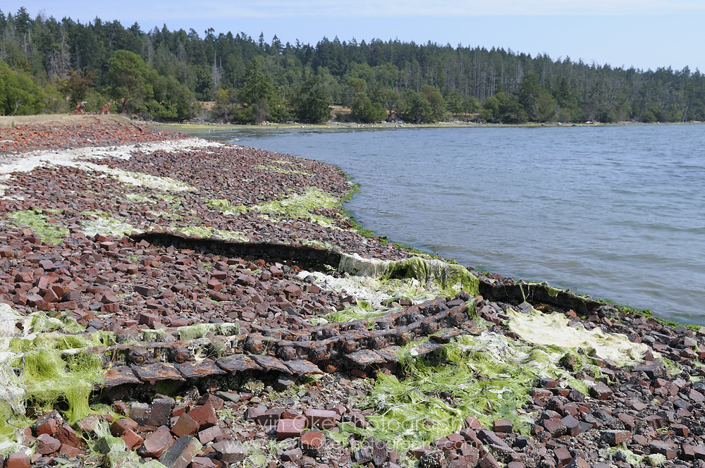Old bricks left behind by the Sidney Tile and Brick Company, Sidney Spit, Gulf Islands National Park Reserve of Canada