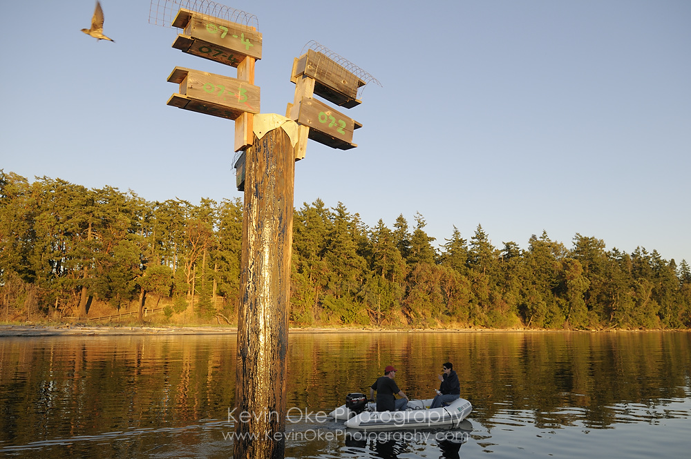 Purple martin birdhouses with people in a tender traveling behind, Sidney Spit, Gulf Islands National Park Reserve of Canada
