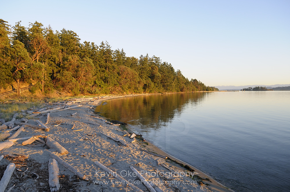The long sandy beach with driftwood, Sidney Spit, Gulf Islands National Park Reserve of Canada