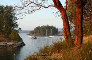 Arbutus trees and anchored boats at Princess Bay, Portland Island