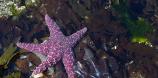 Sea Star at Boat Passage